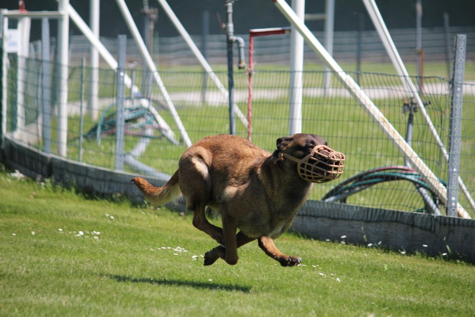 Racing- Dog (Hunderennbahn)